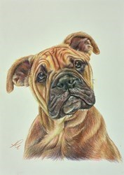Boxer Study Sketch by Hayley Goodhead -  sized 8x12 inches. Available from Whitewall Galleries